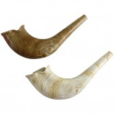Shofar Plastic Natural